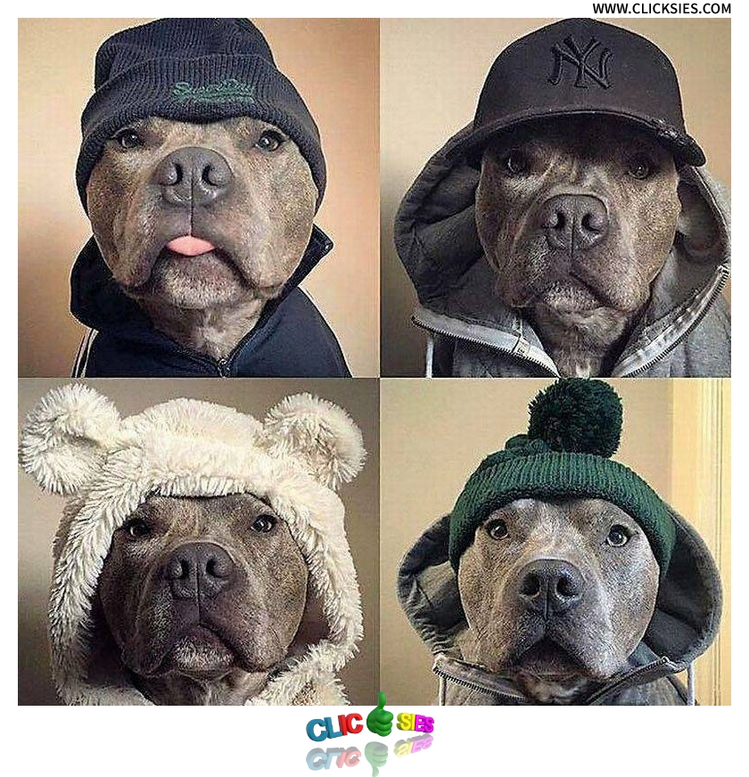 Trends In Dog Fashion - www.clicksies.com