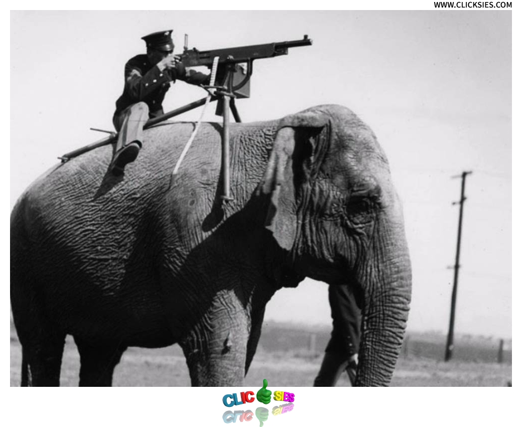 Unbelievable instances of animals in the military - www.clicksies.com