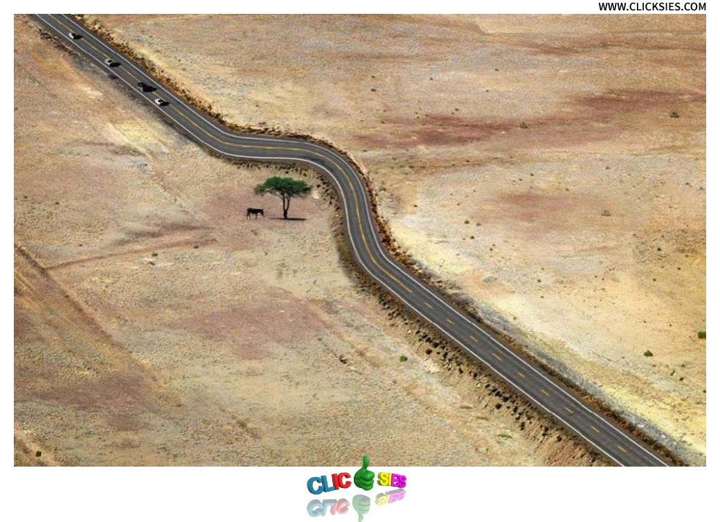 Save every tree as if its the last - www.clicksies.com