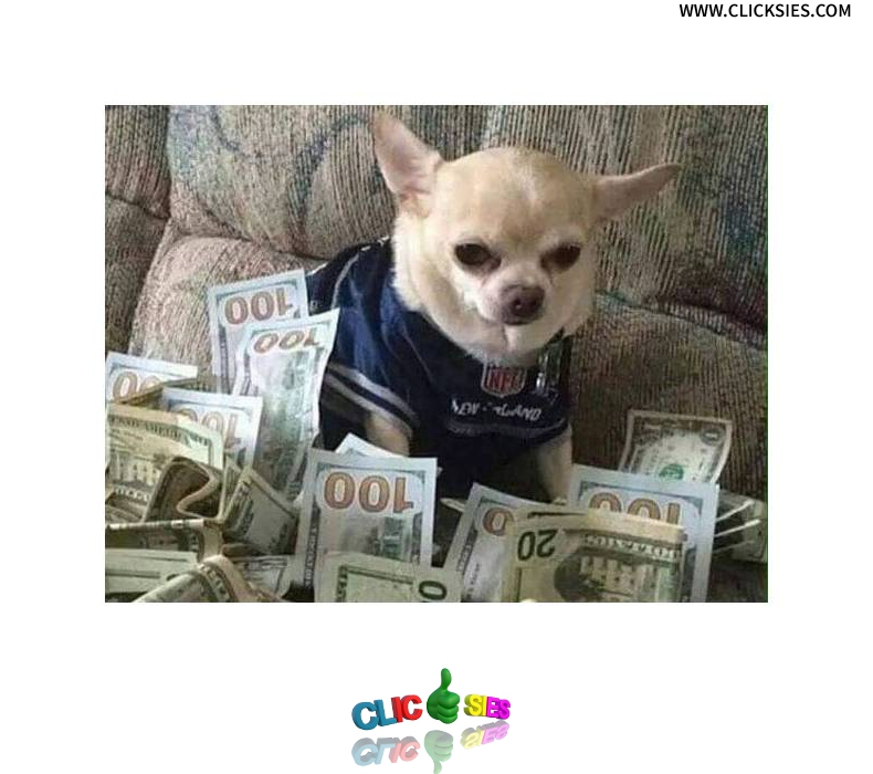 50 Cent's Dog - www.clicksies.com