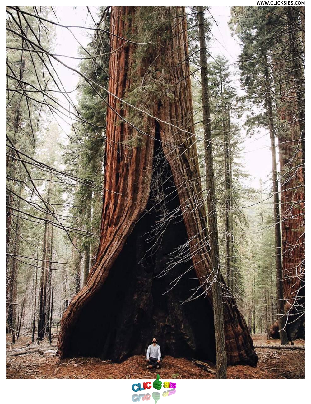 The heart tree in Sequoia National Park California - www.clicksies.com