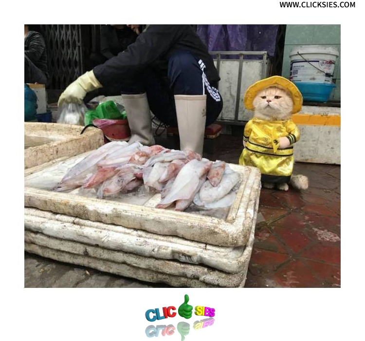 Surveying the fish market. - www.clicksies.com