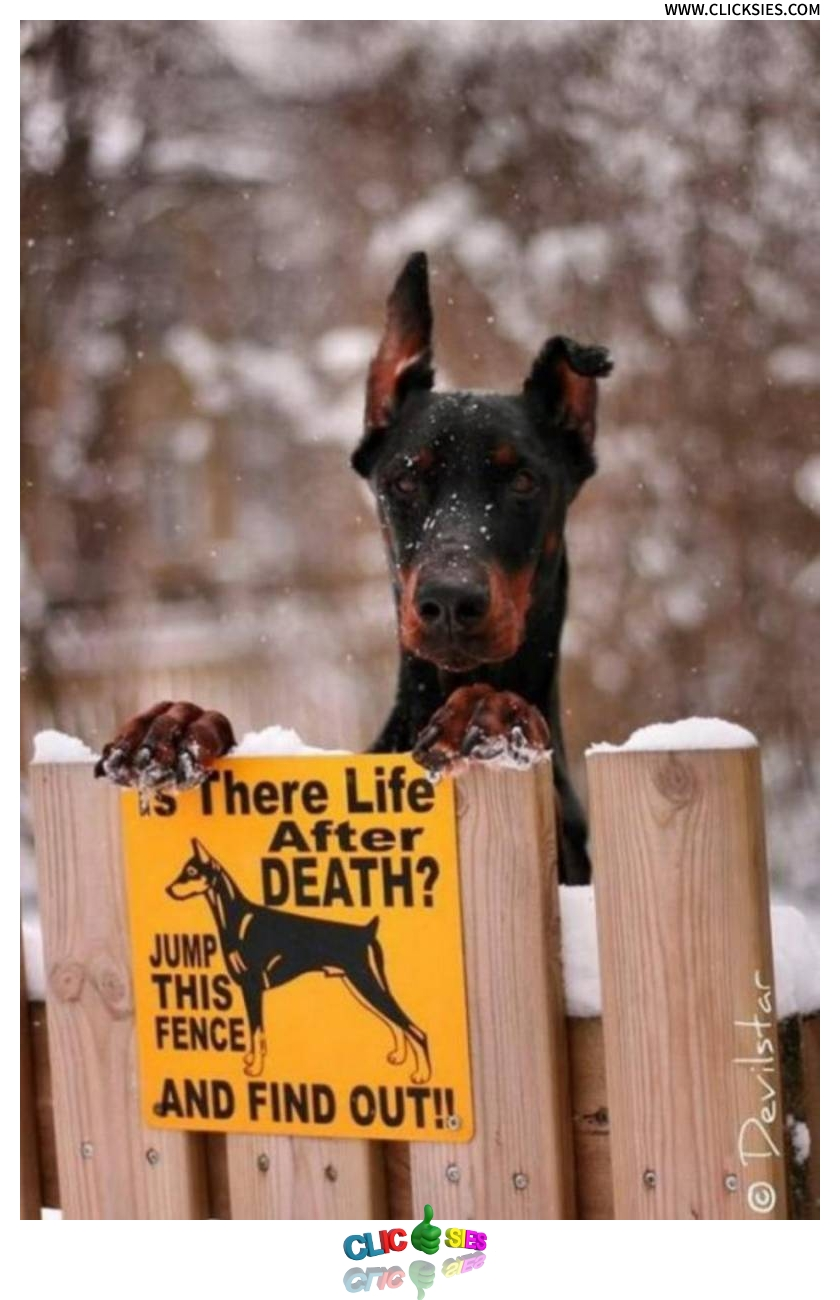 Is there life after death? - www.clicksies.com