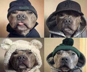 Trends In Dog Fashion