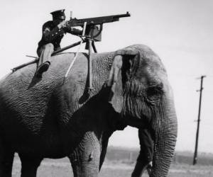 Unbelievable instances of animals in the military