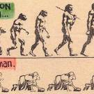 Difference between Evolution and Adaptation